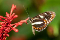 Butterfly (2/23/21)