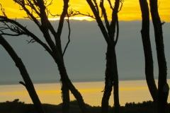 Star Island Trees