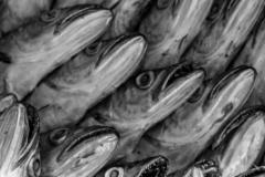 Moroccan_Fish_Market